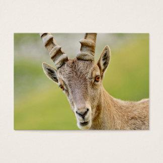 Cartão De Visitas Retrato de um íbex