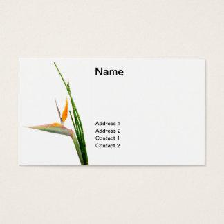 Cartão De Visitas Strelitzia Reginae e junco