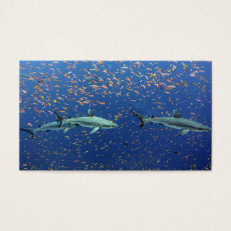 Cartão De Visitas Tubarões pacíficos do recife