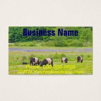 Cartão De Visitas Vacas cercadas de Galloway no pasto Rockport Maine
