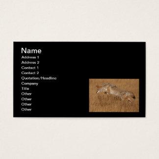Cartão De Visitas Vôo do chacal
