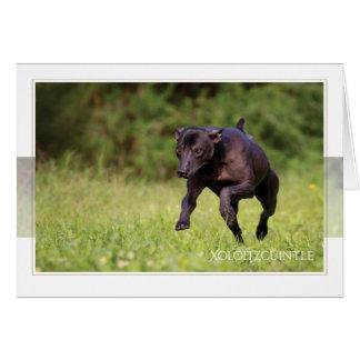 Cartão de Xoloitzcuintle