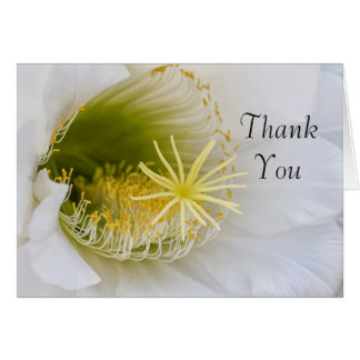 Cartão Dentro de um Echinopsis na flor