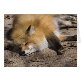 Cartão Descanso do Fox vermelho
