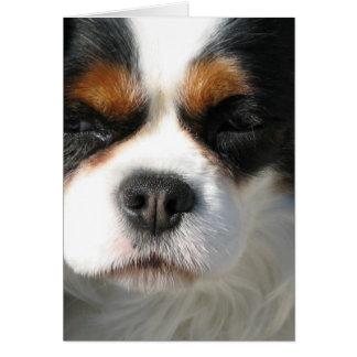 Cartão descuidado do cão do Spaniel de rei Charles