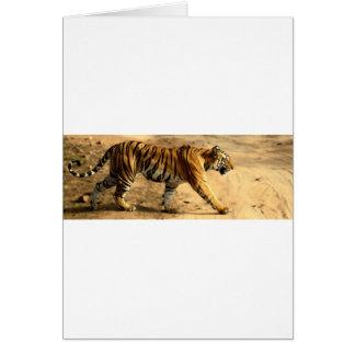 Cartão Desengaço de Tigres dos alugueres
