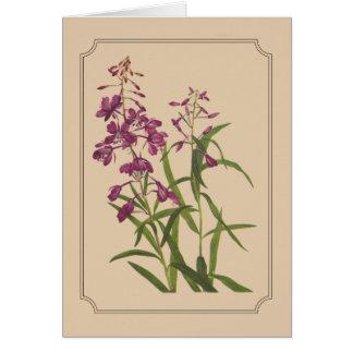 Cartão Desenho botânico do vintage do Fireweed selvagem