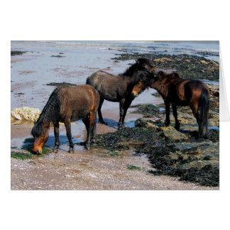 Cartão Devon sul três pôneis de Dartmoor na praia remota