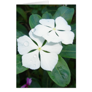 Cartão Dewdrops em v2 branco
