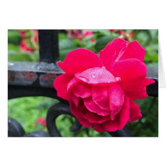 Cartão Dia chuvoso NYC dos rosas da flor do rosa do rosa