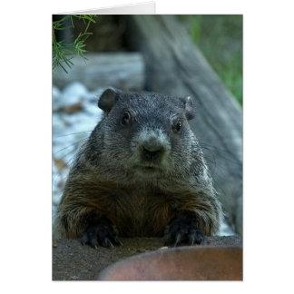 Cartão Dia de Groundhog!
