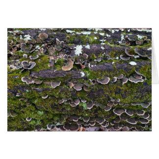 Cartão divertimento mossy do cogumelo