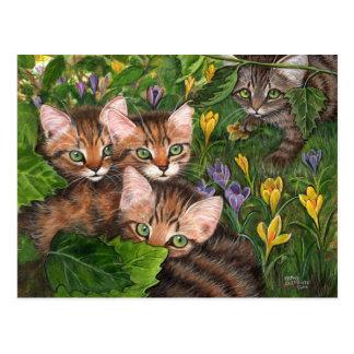 Cartão do açafrão de 4 gatinhos