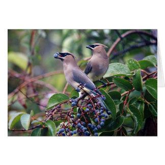 Cartão do almoço do pássaro (vazio para dentro)