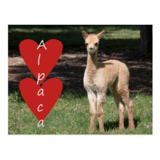 Cartão do amor da alpaca do bebê