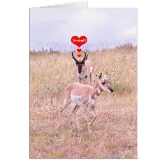 Cartão do amor do antílope