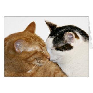 cartão do amor do gatinho
