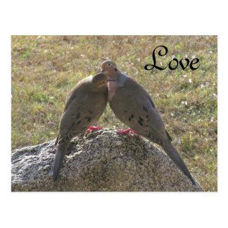 Cartão do amor dos pássaros das pombas de