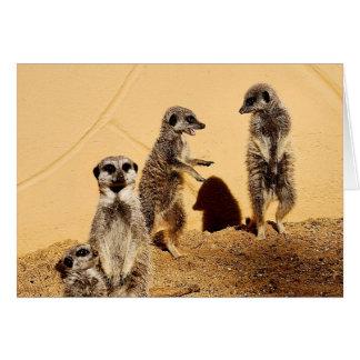 cartão do bate-papo do meercat