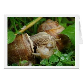 Cartão do beijo do amor dos caracóis