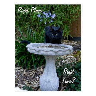 Cartão do Birdbath do gato preto