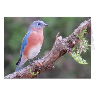 Cartão do Bluebird