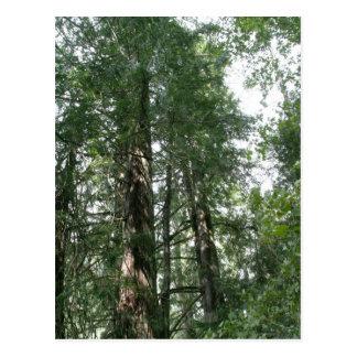Cartão do bosque da catedral