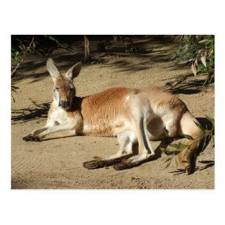 Cartão do canguru