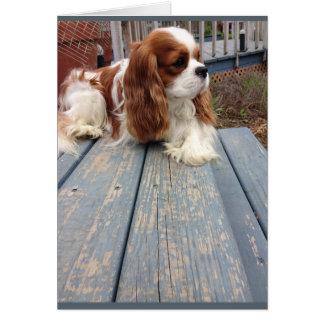 Cartão do cão