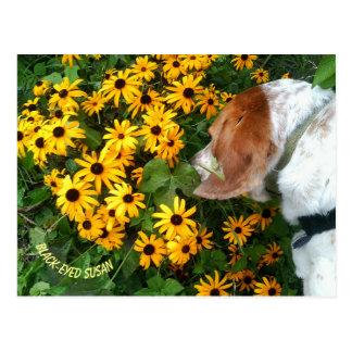 Cartão do cão da margarida de Susan de olhos