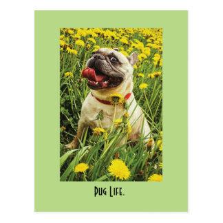 Cartão do cão da vida do Pug