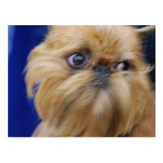 Cartão do cão de Bruxelas Griffon