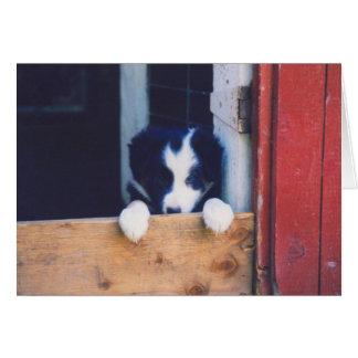 Cartão do cão de filhote de cachorro de border