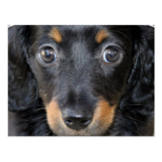Cartão do cão de filhote de cachorro de Daschund Cartão Postal