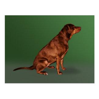 Cartão do cão de labrador retriever
