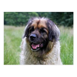 Cartão do cão de Leonberger