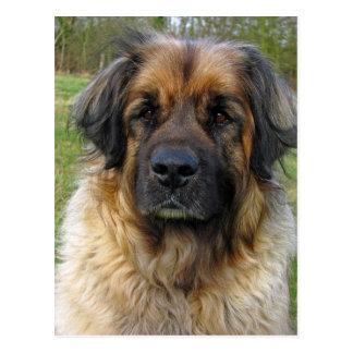 Cartão do cão de Leonberger, foto bonita