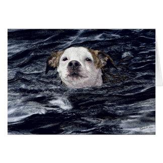 """Cartão do cão de natação da """"determinação"""" -"""