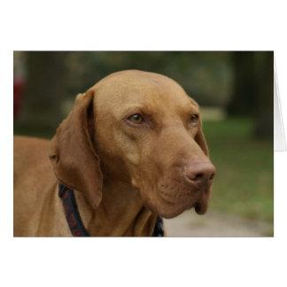 Cartão do cão de Rhodesian Ridgeback