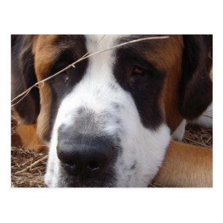 Cartão do cão de St Bernard
