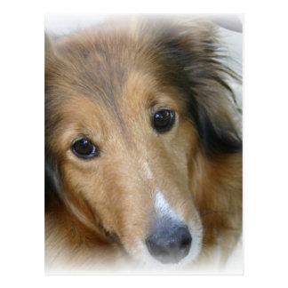 Cartão do cão do Collie