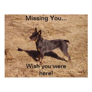 Cartão do cão do gado