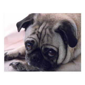 Cartão do cão do Pug