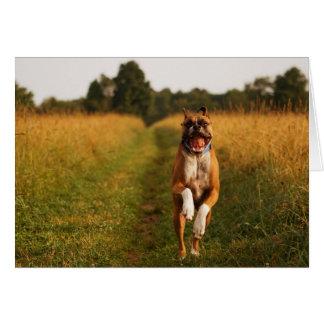Cartão do cão do pugilista