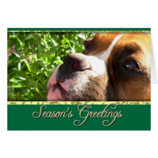 Cartão do cão do pugilista dos cumprimentos da