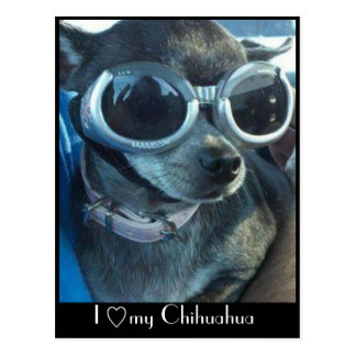 Cartão do cão do qui
