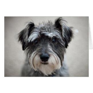 Cartão do cão do Schnauzer