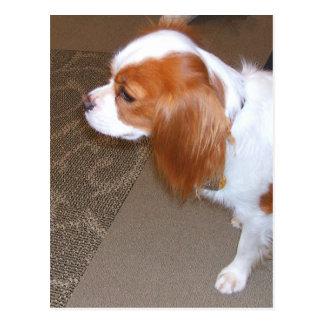 Cartão do cão do Spaniel