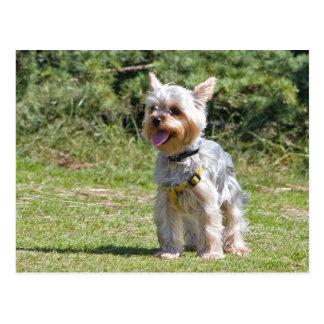 Cartão do cão do yorkshire terrier