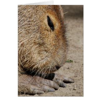 Cartão do Capybara